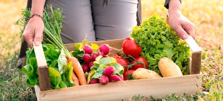 Pesticidas caseros para eliminar plagas de jardín y huerto