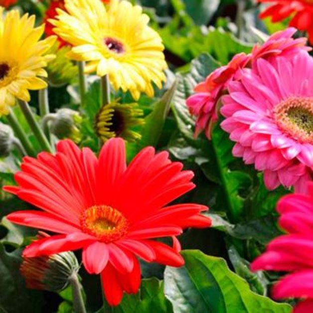 Imagen para la categoría Fertilizante floración