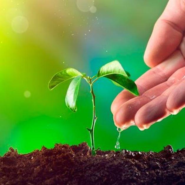 Imagen para la categoría Fertilizante crecimiento