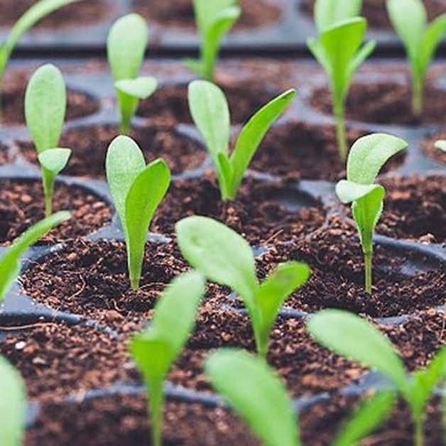 Imagen para la categoría Fertilizantes orgánicos para plantas