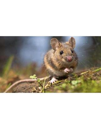 Picture of Soluciòn contra plagas de ratones y ratas