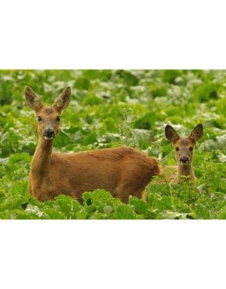 Imagen de Soluciòn contra plagas de ciervos y conejos