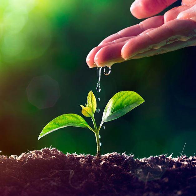 Imagen para la categoría Abono para plantas