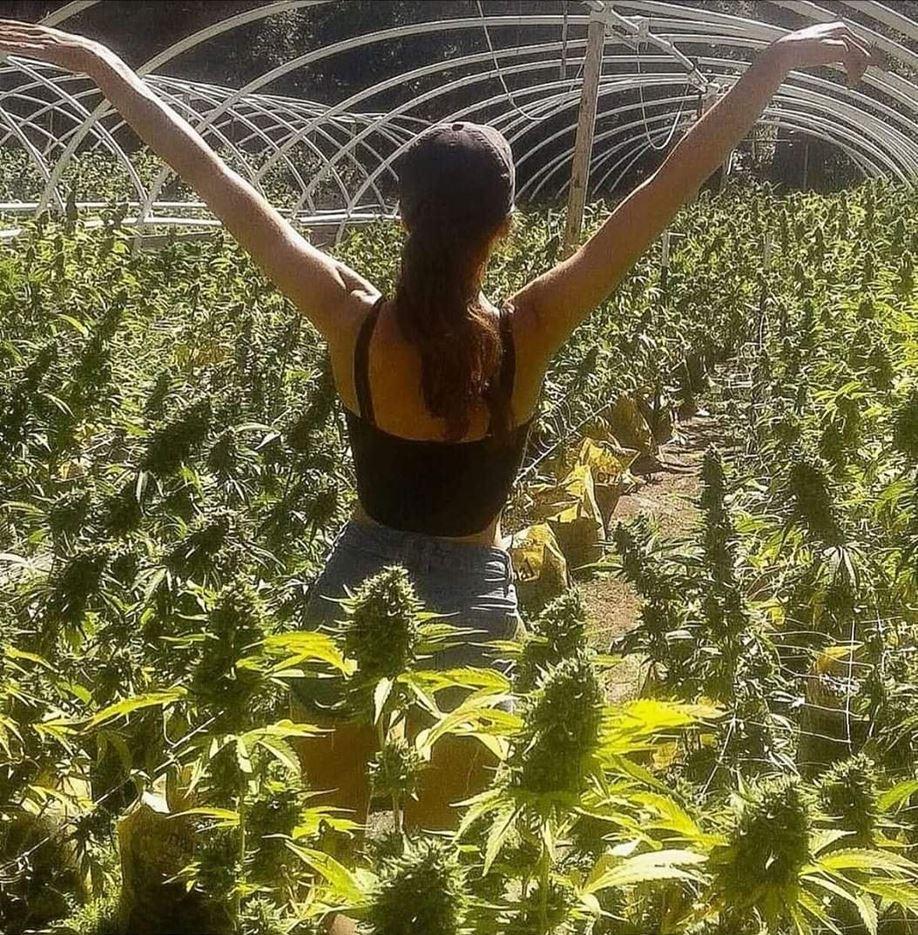 Uso de Aloe Vera para proteger tu plantas