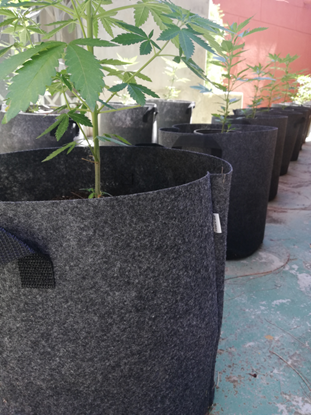Picture of Fabric Pot 25 Liter